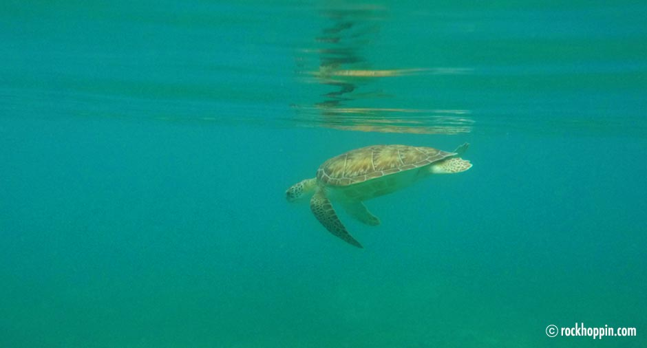 snorkeling-buck-island-sea-turtle